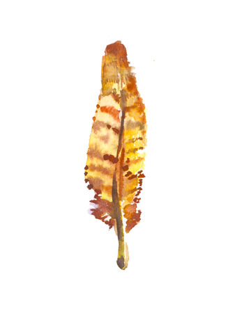 aquarel: Brown feather in watercolor, illustration isolated on white
