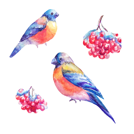 Set of watercolor bullfinches and rowans berry. Hand painted illustrations isolated on white. Drawings suitable for sticker, design of winter products, snow, cristmas scene.