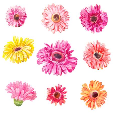 ピンクと黄色のガーベラ ヘッド白で隔離のセットです。水彩花