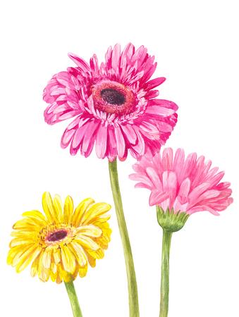 3 つの異なる色のガーベラは、白い背景で隔離。水彩イラスト ポスター、印刷、はがき、招待、および他の夏のデザインに最適です。 写真素材 - 77617626