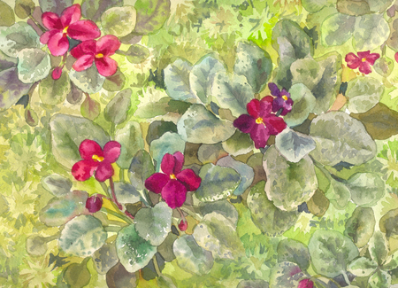 Watercolor purple violets. Burgundy flowers on the bed. View from above. Green wallpaper or poster Stock Photo