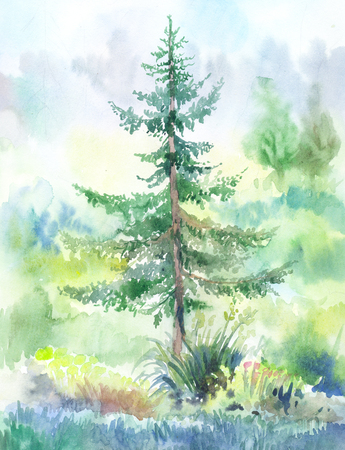 fir-tree,  watercolor painting. Hand drawn landscape painted on wet paper Stock fotó