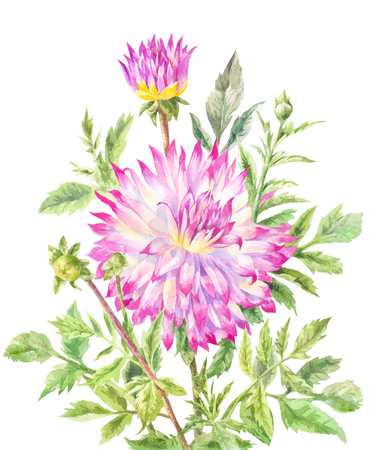 Yellow-pink large dahlia, rennored with watercolor. Illustration on white background, suitable for poster, background, greeting card or wedding invitation