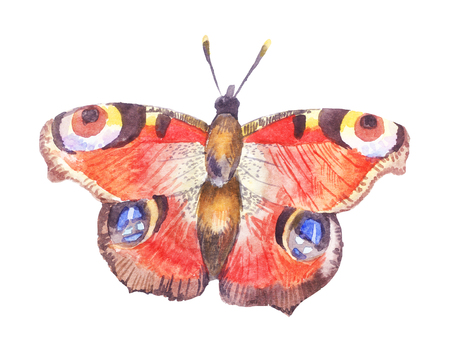 watercolor butterfly,  illustration isolated on white