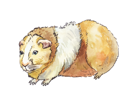A watercolor guinea pig isolated on white background.