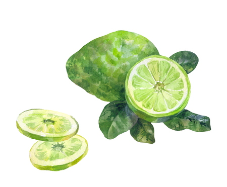 Sliced bergamot. Watercolor illustration on a white background. Additive in tea. Green pear, lime