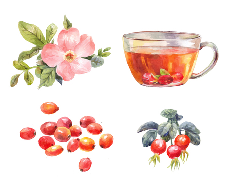 Set of rosehips watercolor. Tea with rose hips. Flower, berries, and infusion branch. Illustration isolated on white