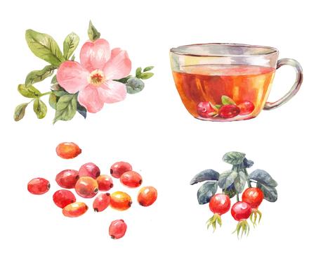 Set rozenbottels aquarel. Thee met rozenbottels. Bloem, bessen en infusietak. Illustratie op wit wordt geïsoleerd