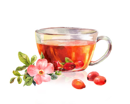 rose hips: Glass mug of herbal tea. Drink rosehip tea. Beautiful watercolor drawing. Taste of the tea. Ilustration isolated on white