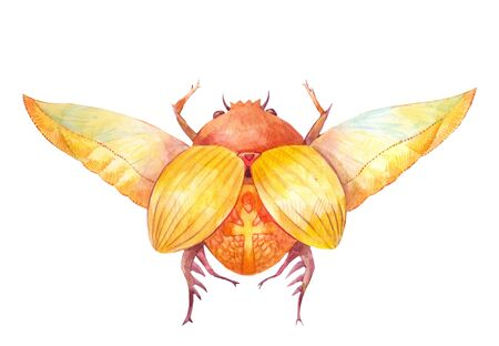 Scarab beetle. Egyptian symbol of the sun. Watercolor illustration on white background
