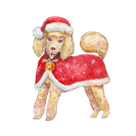 Watercolor dog in red Santa Claus clothes. Smiling poodle in a Christmas cap or hat. Illustration isolated on white.
