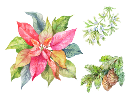 Set of Cristmas plants. Poinsettia, fir branch, viscum. Winter illustration isolated on white.