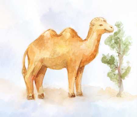 Cute watercolor two-humped camel eating near bush on desert background Ilustrace