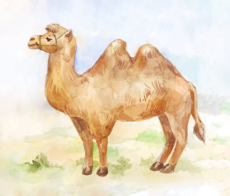 Desert background. Vintage watercolor illustration of standing camel