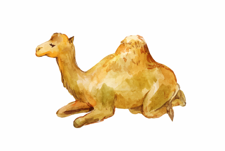 Lying one-humpy camel. Watercolor illustration isolated on white background.