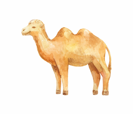 Illustration of standing camel isolated on white background.