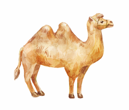 African camel illustration.  イラスト・ベクター素材