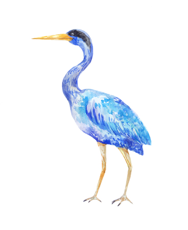 Watercolor blue heron. Illustration of a standing bird on a white background 스톡 콘텐츠