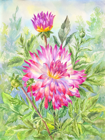 Watercolor dahlia, flowering garden. Summer illustration suitable for postcard, poster, scrapbooking paper Banco de Imagens