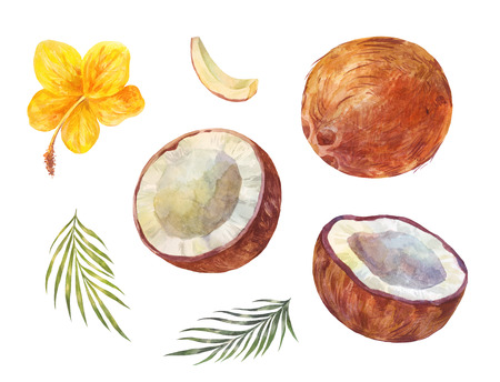 Watercolor coconuts set, summer drawing isolated on white. Palm leaves, flower and nuts Stockfoto