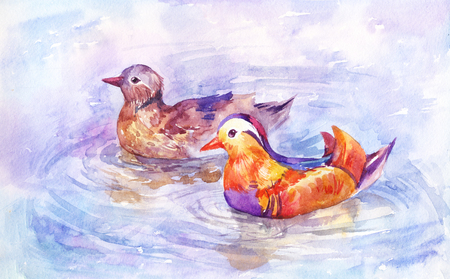 Two mandarin ducks swim on the lake,  pair of beautiful birds on the river. Watercolor illustration, vintage background suitable for bedroom decoration
