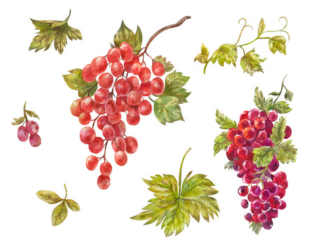 Watercolor set of grapes. Hand-drawn wine berries isolated on white. Red sweet healthy treats Stock Photo