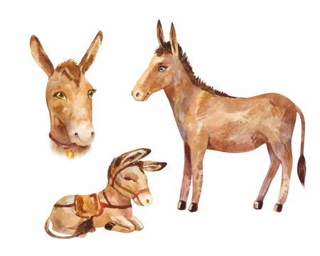 Cute little donkey lying and standing,  portrait of a pet. Watercolor zoo illustration