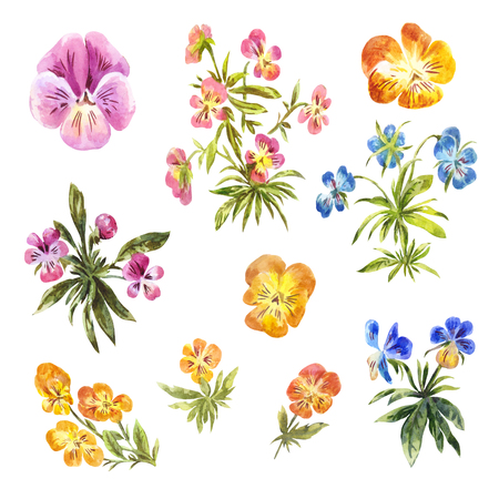 Set of watercolor little pansies isolated on white. Floral collection suitable for summer or spring design