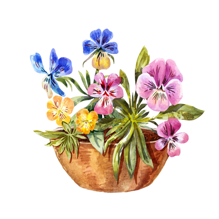 Watercolor drawing of flowerbed. Cute purple, blue, yellow pansies isolated on white Stock Photo
