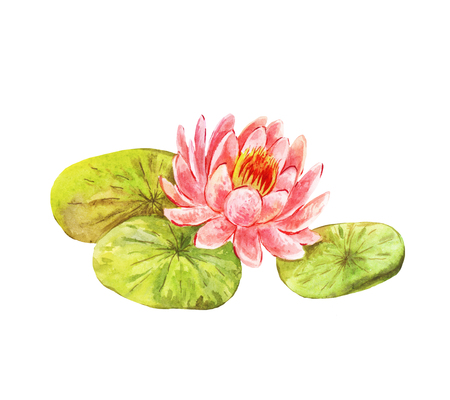 Vintage picture of lotus. Watercolor feng shui flower isolated on white