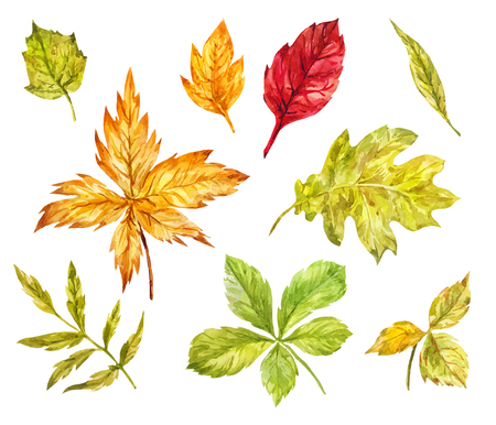 Maple, rowan, oak, birch leaves isolated on white. Watercolor set of elements for light autumn design