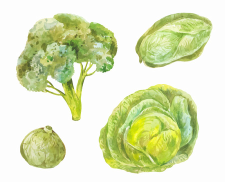 Different varieties of cabbage. Watercolor set of green healthy food isolated on white Reklamní fotografie - 112047956