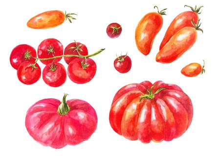 Wiele różnych pomidorów. Zestaw akwareli. Odmiany żółte, czerwone, zielone, duże i małe. Różne zdrowe warzywa na białym tle