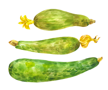 Several different zucchini. Watercolor set. Healthy food. Vegetable with yellow flower isolated