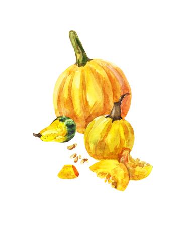Still-life with three yellow pumpkins on a white background.  illustration. Harvesting season