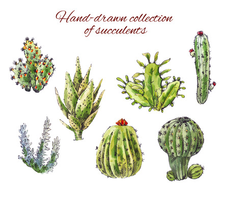 Several hand-drawn cacti. Vector illustration of succulents isolated on white background. Plants in the desert 일러스트