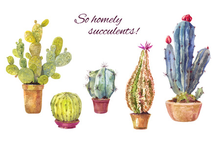 Set of watercolor cacti in pots. Homely illustration