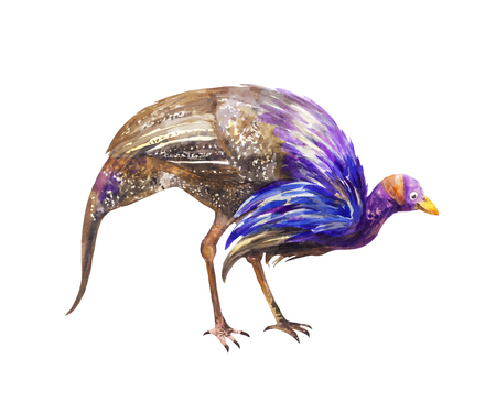 Blue speckled guinea fowl seeking food. Watercolor illustration isolated on white 写真素材