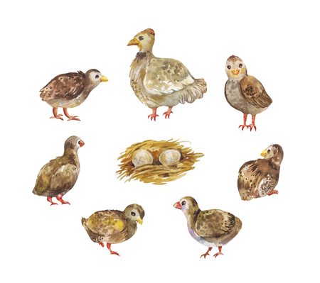 Chicken with chicks and nest. Set of watercolor illustration of poultry isolated on white 写真素材