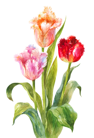 Three bright watercolor tulips. Bouquet of flowers on a white background. Decorative element to decorate a postcard or greeting