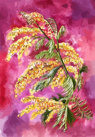 Bright yellow mimosa on an exciting purple background in watercolor style. Spring bouquet, unusual flower