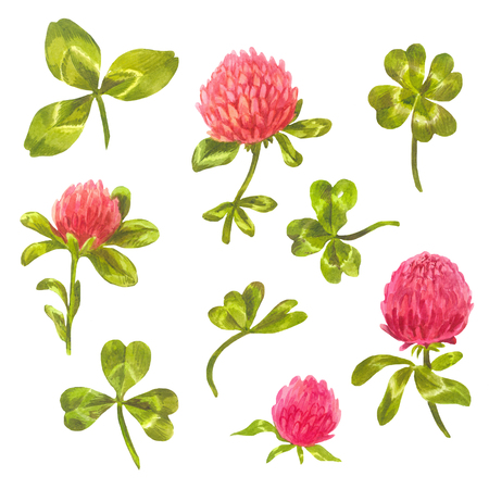 Clover leaves and flowers. Spring elements for wedding design. Quatrefoil