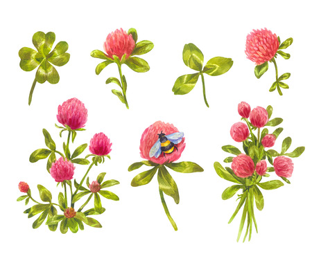 Watercolor clover Leaves, flowers and bouquets