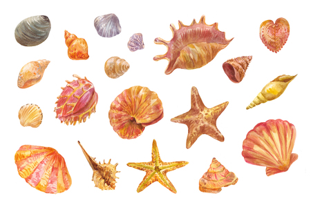 Hand-drawn shells. Set of watercolor seashells, starfishes and conches. Drawings suitable for suitable for creating natural design patterns, backgrounds, paper for scrapbooking, etc. 写真素材