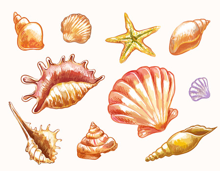 Hand-drawn vector sketches of shells. Decorative elements suitable for summer or sea natural design