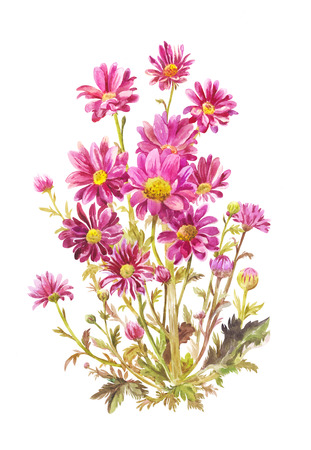 Claret garden flowers isolated on white. Watercolor drawing of Michaelmas daisy 写真素材