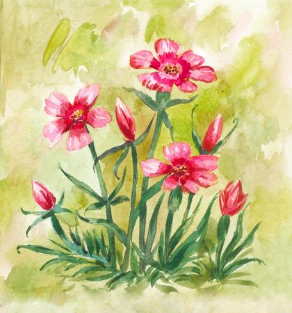 Carnation flowers. Watercolor illustration