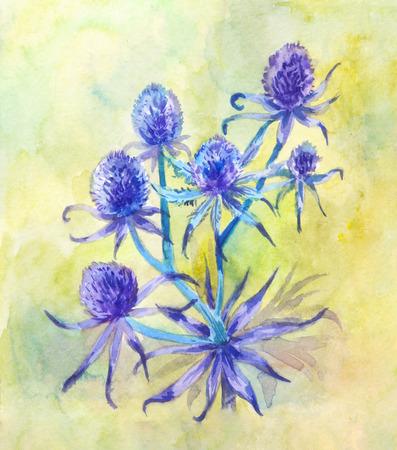 Watercolor eryngium. Flowering Apiaceae plant. Blue prickly grass 写真素材