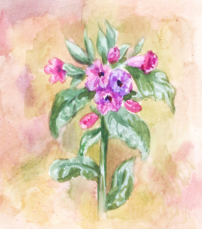 Lungwort illustration. Watercolor field plant