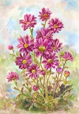 Bouquet of wild purple flowers.